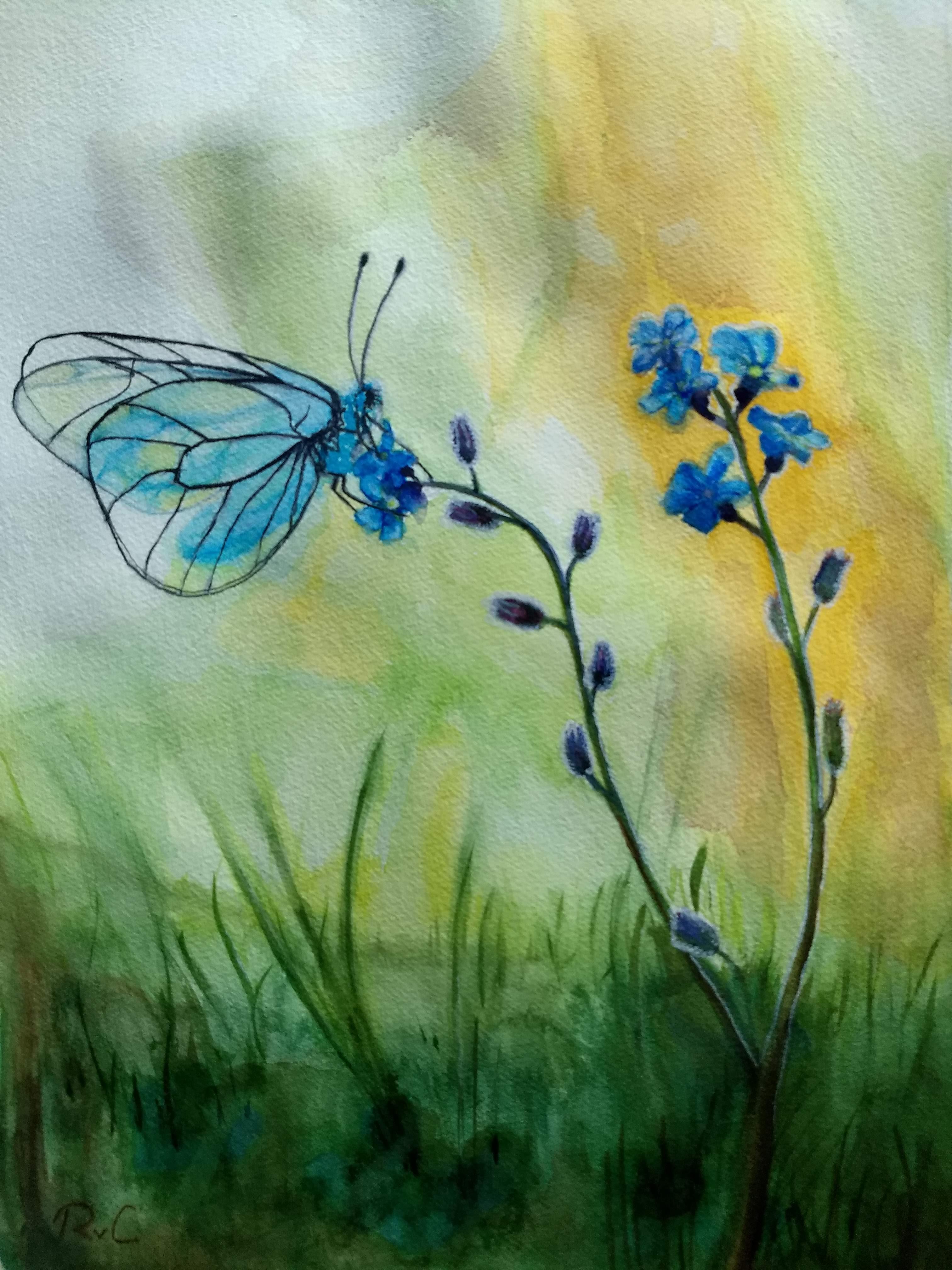 aquarel-vlinder-blauw