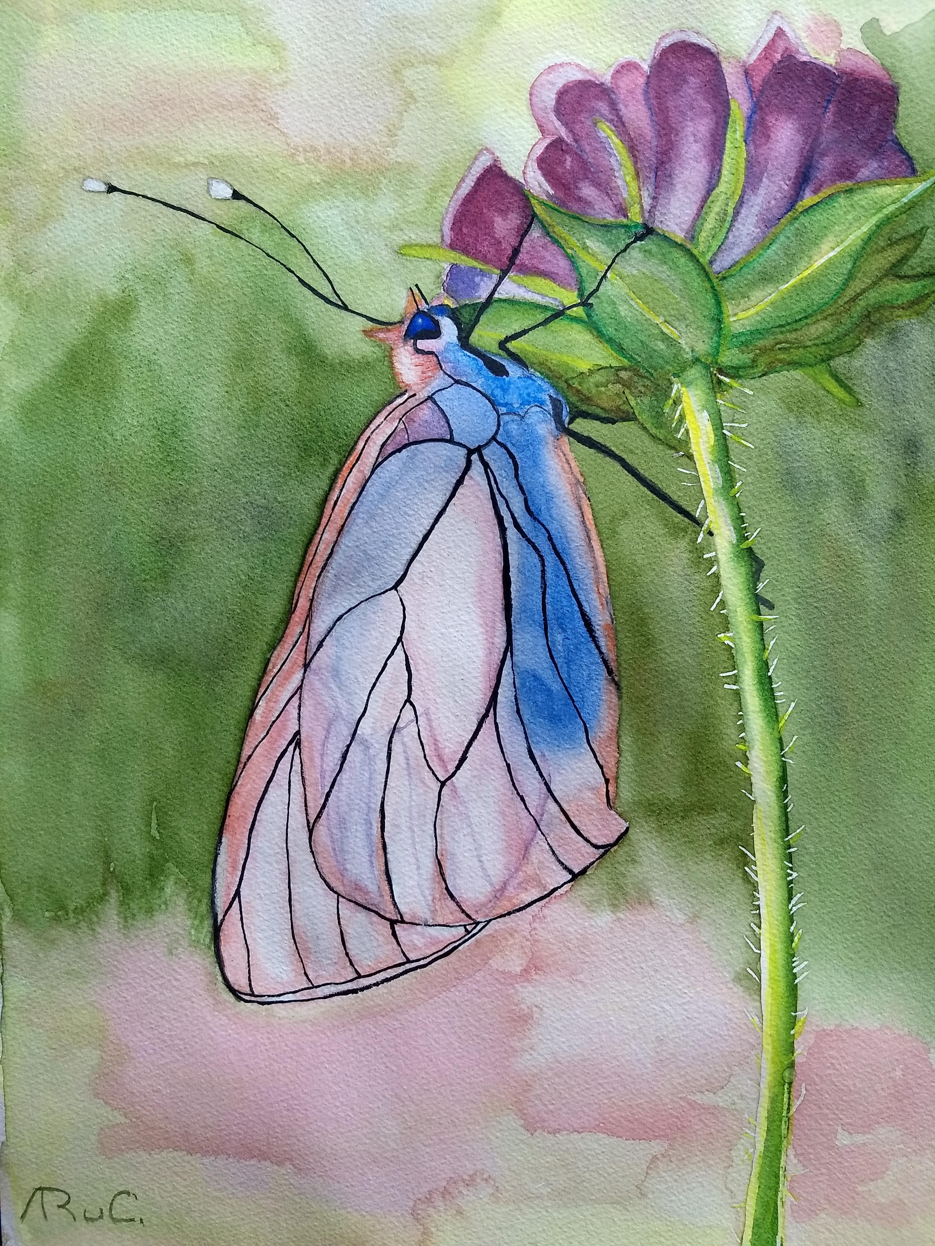aquarel-vlinder-roze